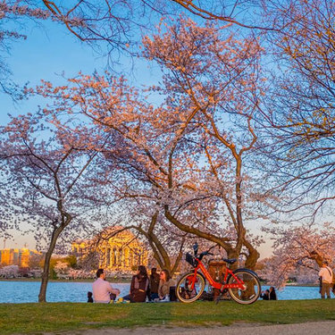@woodsia76 - Picnic along the Tidal Basin during the cherry blossoms - Spring in Washington, DC