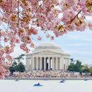 @markeisenhower - Paddleboats by Jefferson Memorial cherry blossoms - Washington, DC