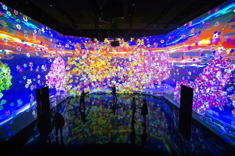 In Peak Bloom interactive museum exhibit at ARTECHOUSE - The best things to do this spring in Washington, DC