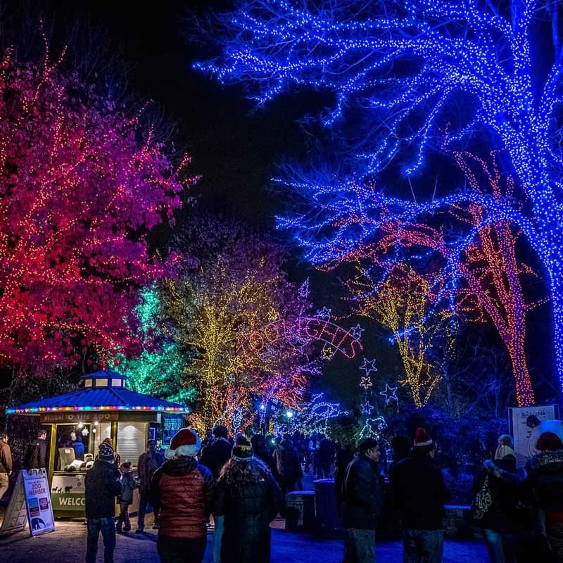 Christmas Events Dc 2019.The Best Things To Do This Winter In Dc Washington Org